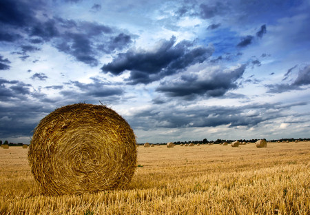 Bs_Rolled_Wheat_8615026