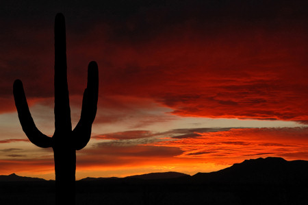 Arizona sunset with Saguario Cactus