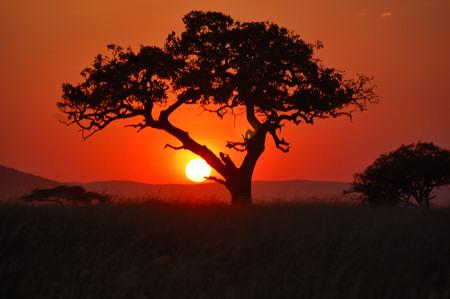 tree at sunset in the Serengeti, Tanzania