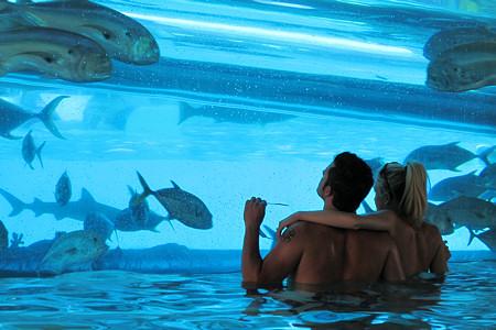 Gold Nugget, Shark Tank Pool