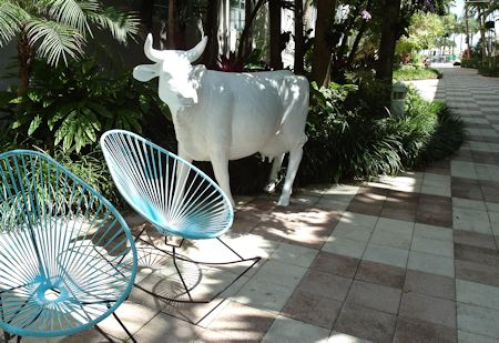Yes! A cow in the courtyard at The Surfcomber Hotel Miami | South Beach, Florida